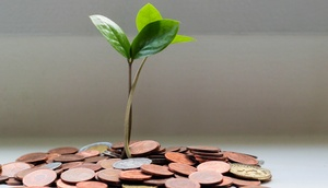 Aus Münzen wächst eine Pflanze.