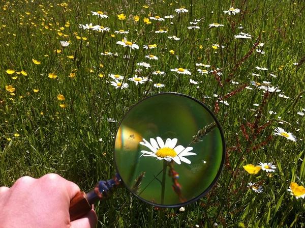 Blume durch Lupe betrachtet, © Bild von Anderele auf Pixabay