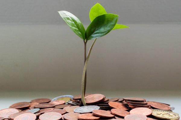 Pflänzchen wächst auf einem Geldhaufen, © Photo by Micheile Henderson on Unsplash