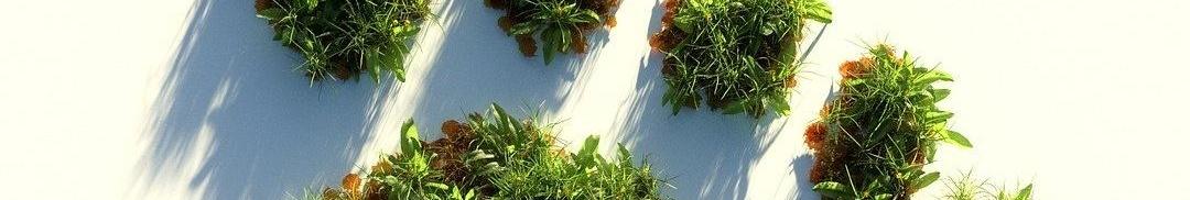 Tropenwald in Form eines Fußabdrucks